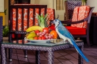 Exotic Birds Lobby