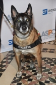 Getty Images: Mission K9 Rescue