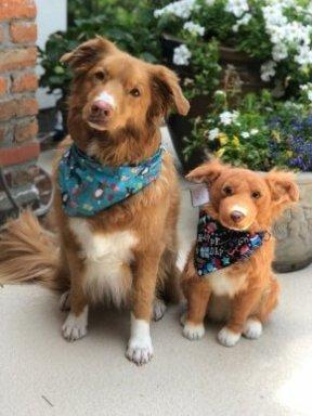 brown-dog-custom-stuffed-animal2578235631406740453.jpg