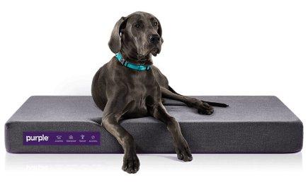 pet-bed-large-dog-1204038013997939866.jpg
