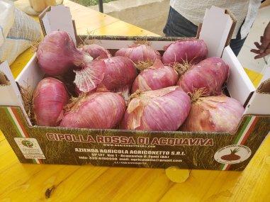 Aquaviva Onion